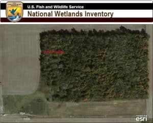 forested canopy hides wetland from camera
